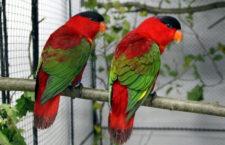 Přehled ptačích burz a výstav pro víkend 28. až 30. dubna 2017