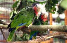 Přehled ptačích burz a výstav pro víkend 12. až 14. května 2017