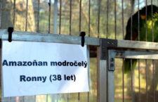 Pomozte nám najít nejstaršího žijícího papouška v České republice!