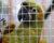 Přehled ptačích burz a výstav pro víkend 19. až 21. května 2017