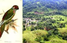 """Vědci hledají 25 """"ztracených"""" druhů zvířat. Je mezi nimi i papoušek pyrura kolumbijský"""