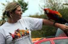 Volné létání papoušků podle skupiny Uzavřená křídla: První kroky k úspěchu
