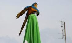 Postup hasičů při záchraně ulétlého papouška: na co máte jako majitel domácího mazlíčka právo?