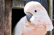 Přehled ptačích burz a výstav pro víkend 14. až 16. února 2020