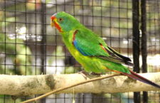 Přehled ptačích burz a výstav pro víkend 21. až 23. července 2017