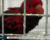 Zabavení papoušci se vrátili z pražského letiště zpět na Bali. A zřejmě opět poletí do Prahy
