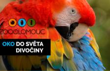 Olomoucká zoo po 30 letech zpřístupnila veřejnosti velké papoušky: ary ararauny a arakangy