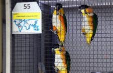Přehled ptačích burz a výstav pro víkend 11. až 13. srpna 2017