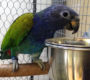 Videostřípky z výstavy okrasného ptactva v Hrotovicích: vzácní loriové, afričtí papoušci a amazónci