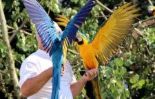 Přehled ptačích burz a výstav pro víkend 4. až 6. srpna 2017