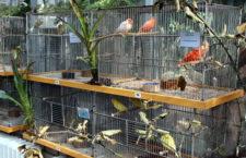 Přehled ptačích burz a výstav pro víkend 18. až 20. srpna 2017