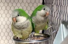 Přehled ptačích burz a výstav pro víkend 26. až 28. června 2020
