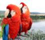 U Šumperka padl český rekord: 55 volně létajících papoušků obdivovalo 2 500 návštěvníků