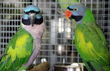 Přehled ptačích burz a výstav pro víkend 26. až 28. července 2019