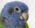 Přehled ptačích burz a výstav pro víkend 22. až 24. září 2017