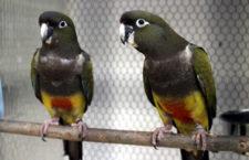 Přehled ptačích burz a výstav pro víkend 29. září až 1. října 2017