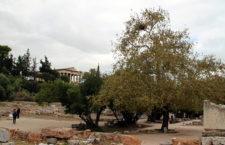 Invazní mníšci šedí už hnízdí i pod Akropolí v Athénách
