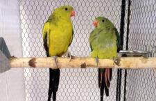 Přehled ptačích burz a výstav pro víkend 24. až 26. ledna 2020
