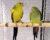 Přehled ptačích burz a výstav pro víkend 13. až 15. října 2017