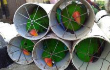 Další otřesný případ pašování papoušků: eklekty a kakaduy nacpali do odpadových trubek