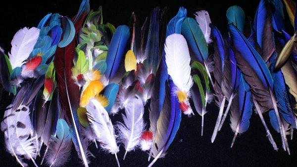 Čtenáři Ararauny vyslyšeli výzvu a zavalili výrobce rybářských mušek papouščím peřím