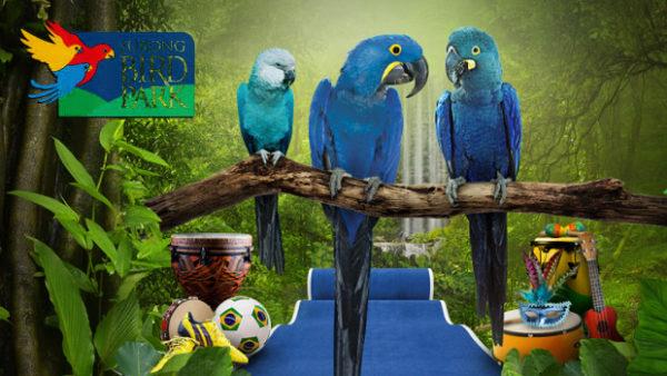 Máme všechny tři modré druhy arů a vystavíme je, chlubí se singapurský Jurong Bird Park