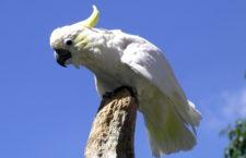 Ostrov Komodo se příští rok zcela uzavře turistům. Pomůže to nejen varanům, ale i papouškům