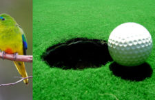 Zničí golfové hřiště za 20 milionů dolarů zimoviště kriticky ohrožené neofémy oranžovobřiché?