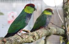 Přehled ptačích burz a výstav pro víkend 17. až 19. listopadu 2017