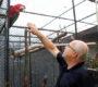 Na návštěvě u Jiřího Stejskala, chovatele velkých i malých druhů arů z Pardubic