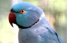 Přehled ptačích burz a výstav pro víkend 8. až 10. prosince 2017