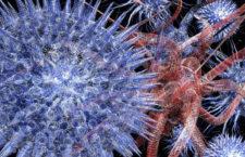 Itálie a Nizozemí hlásí nová ohniska ptačí chřipky, dokonce i typ H5N6 přenosný na člověka
