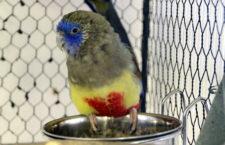 Přehled ptačích burz a výstav pro víkend 15. až 17. prosince 2017