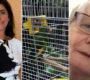Ochočený papoušek uhynul na tuberkulózu, majitelé z nákazy viní ptačí hotel