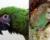 Nejstarší papouščí mumii je 2 000 let. Nalezli ji v Mexiku a patří arovi vojenskému