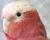 Přehled ptačích burz a výstav pro víkend 23. až 25. února 2018