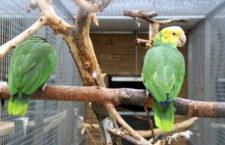 Papouščí zoo Bošovice zítra zahájí jubilejní desátou návštěvní sezónu. Mrazu navzdory