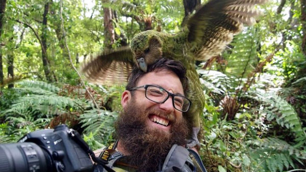 Sirocco žije! Nejznámější kakapo soví nebyl dva roky k nalezení