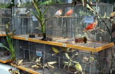 Přehled ptačích burz a výstav pro víkend 21. až 23. května 2021