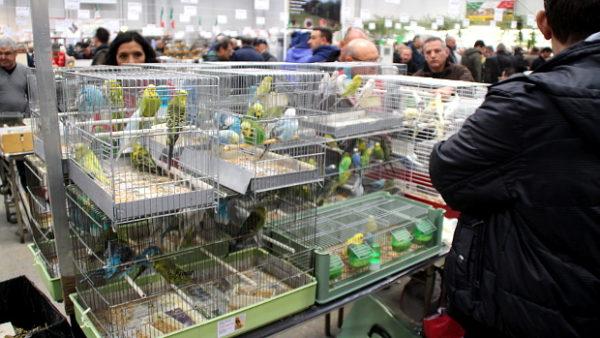 Přehled ptačích burz a výstav pro víkend 16. až 18. března 2018