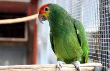 Přehled ptačích burz a výstav pro víkend 27. až 29. dubna 2018