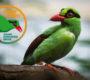Ararauna.cz podporuje kampaň Silent Forest na záchranu kriticky ohrožených ptáků Indonésie