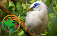 Odneste starý dalekohled do zoo a pomozte zachránit kriticky ohrožené pěvce v Indonésii!