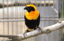 Přehled ptačích burz a výstav pro víkend 20. až 22. dubna 2018