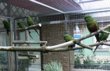 Papouščí zoo Bošovice rozšiřuje kolekci o kogny jižní, nejjižněji žijící papoušky na světě