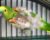 Žena vyhodila živého papouška v plastovém pytli do schránky, zvířecí útulek ho zachránil