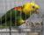 Přehled ptačích burz a výstav pro víkend 25. až 27. května 2018