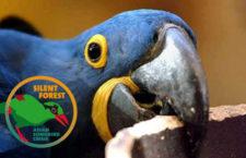 Chcete se podívat do zázemí liberecké zoo na ary hyacintové a nestory kea?