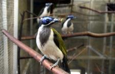 Přehled ptačích burz a výstav pro víkend 4. až 6. května 2018