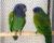 Přehled ptačích burz a výstav pro víkend 22. až 24. června 2018